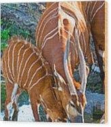 Bongo Mother And Calf Wood Print
