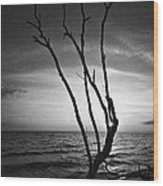 Bonita Beach Tree Black And White Wood Print