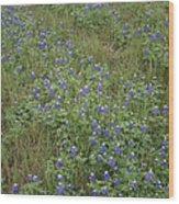 Bonnets In Blue Wood Print by Paulette Maffucci