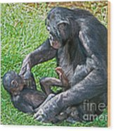 Bonobo Adult Playing With Baby Wood Print