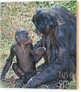 Bonobo Adult Talking To Juvenile Wood Print