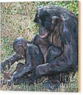 Bonobo Adult Tickeling Juvenile Wood Print