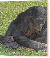 Bonobo Wood Print