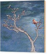 Bonsai Cardinal Wood Print