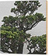 Bonsai Pine Wood Print