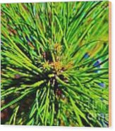 Bonzi Pine Wood Print