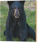 Boo-boo The Little Black Bear Cub Wood Print
