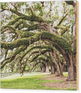 Boones Oaks Wood Print