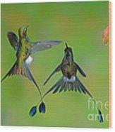 Booted Racket-tail Hummingbird Males Wood Print