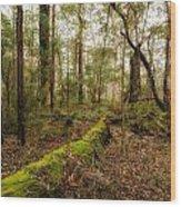 Boranup Forest - Western Australia Wood Print