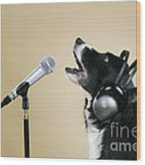 Border Collie Dog Singing Wood Print