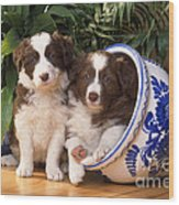 Border Collie Puppies In Plant Pot Wood Print