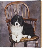 Border Collie Puppy On Chair Wood Print