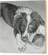 Border Collie Puppy Wood Print
