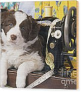 Border Collie Puppy With Sewing Machine Wood Print