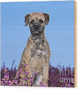 Border Terrier Dog, In Heather Wood Print