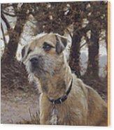Border Terrier In The Woods Wood Print
