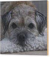 Border Terrier Netherlands Wood Print