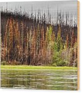 Boreal Forest At Yukon River Destroyed By Fire Wood Print