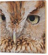 Boreal Owl Eyes  Wood Print