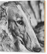 Borzoi Dog Portrait Wood Print by Christian Lagereek