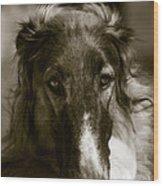 Borzoi Hound Portrait Wood Print by Christian Lagereek