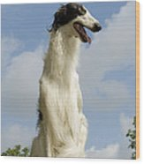 Borzoi Or Russian Wolfhound Wood Print
