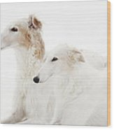 Borzoi Sight Hounds Wood Print by Christian Lagereek
