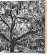 Bosque Bello Oak Wood Print