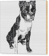 Boston Bull Terrier Wood Print