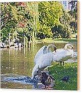 Boston Common Swan Lake Wood Print