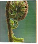 Botanica Series - Unfurling Fern Wood Print