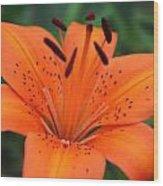 Botanical Beauty 1 Wood Print