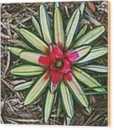 Botanical Flower Wood Print