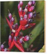 botanical garden in Costa Rica 2 Wood Print