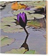 Botanical Garden Lotus Flowers Wood Print
