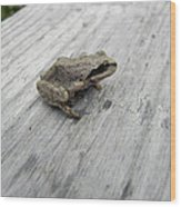 Botanical Gardens Tree Frog Wood Print