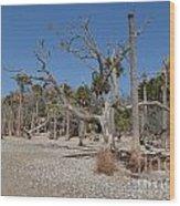 Botany Beach Wood Print