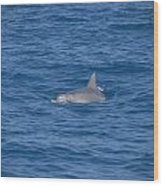 Bottlenose Dolphin Wood Print