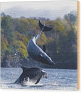 Bottleneck Dolphin Playing Wood Print