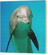 Bottlenose Dolphin Portrait Wood Print
