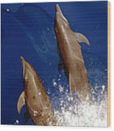 Bottlenose Dolphins Tursiops Truncatus Wood Print