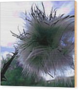 Bottomland Thistle Wood Print