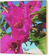Bougainvillea Beauty Wood Print