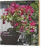 Bougainvillea Bonsai Tree Wood Print