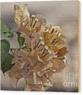 Bougainvillea Flowers  Wood Print