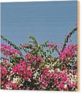 Bougainvillea Flowers Wood Print