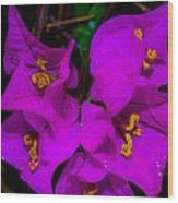 Bougainvillea Matte Touch Wood Print by Lisa Cortez