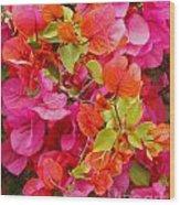 Bougainvillea Multi-colored Flowers Wood Print
