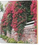 Bougainvillea Wall In San Francisco Wood Print